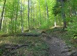 Bieszczady, szlak na Jasło