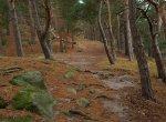 trail towards Hamburger Wappen