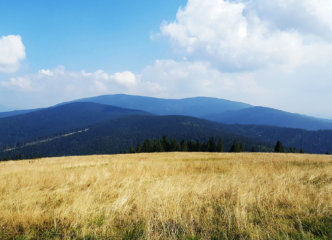 Meadows on Hala Rysianka