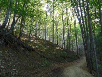 Ascent towards Równica