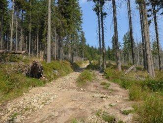 Towards Barania Góra