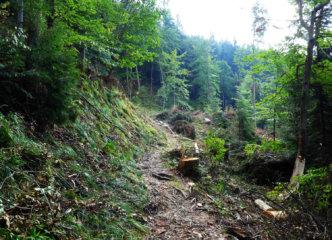 After felling landscape