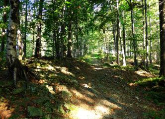 Ascent to Jaworzyna